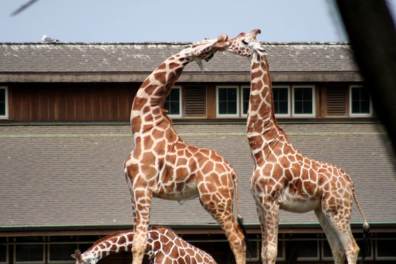dierentuindilemma