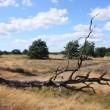Kamer wil verkoop natuurgebieden stilleggen na oproep PvdD