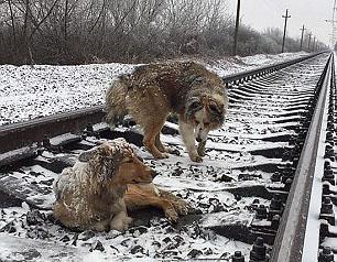 treinsporen