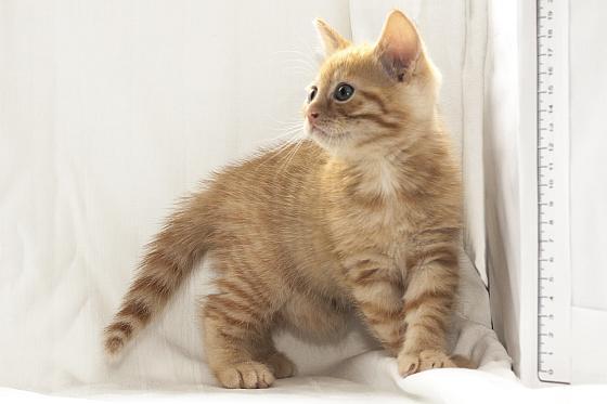 kitten 6 weken