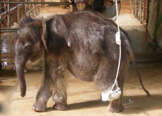 olifantje namal