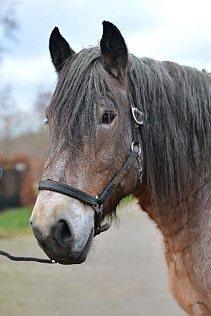 Frits - paarden vrij