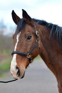 Oquenda - paarden vrij
