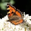 2016 rampjaar voor vlinders VK, Nederland krabbelt op