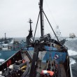 Sea Shepherd aangevallen door Japanse walvisvaarders