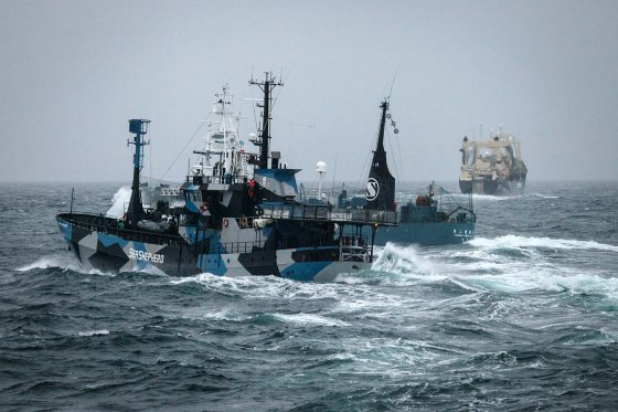walvisjacht