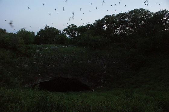 vleermuiskolonie