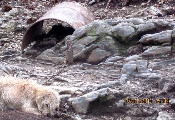 kettinghonden