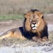 #GNvdD: Het is Wereld Leeuwen Dag