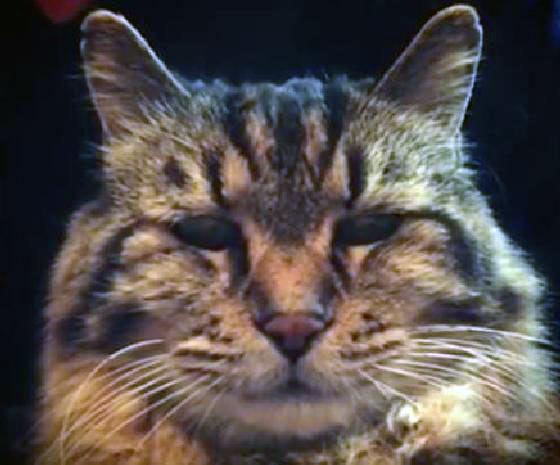 Corduroy oudste kat