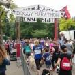 VIER VOETERS Doggy Marathon groot succes