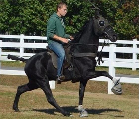 paard van 16 maanden