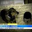 #GNvdD: Adoptiehond Duke redt baby Harper (video)