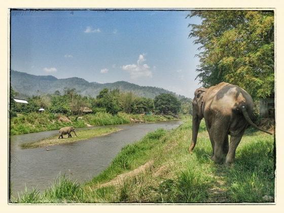 werkolifanten