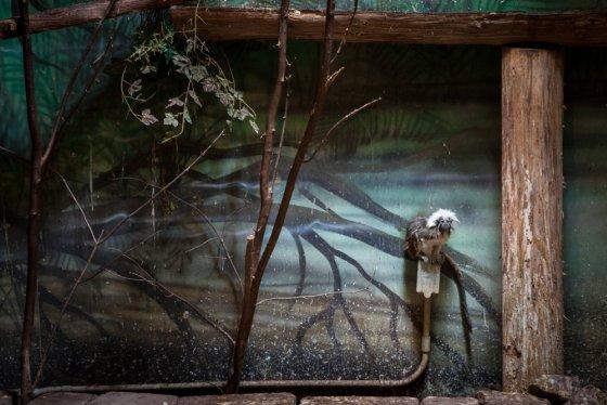 dierentuinverblijven