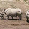 Weer neushoorn gedood in Kaziranga National Park