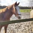 Paardensport uit de Olympische Spelen