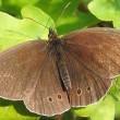 Vlinders pieken eerder