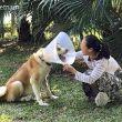 #GNvdD: Blinde Akita gered van vleeshandel