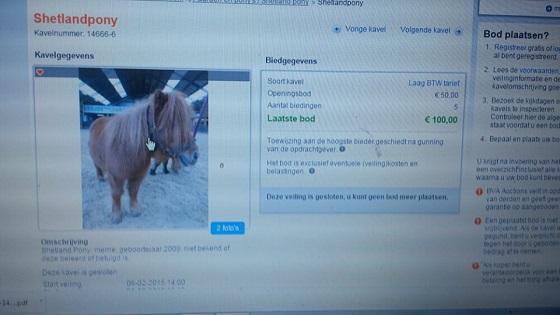 pony - BVA Auctions