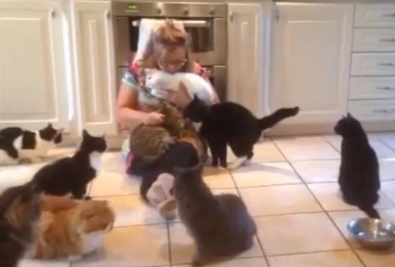 verwaarloosde katten