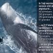 Erwin Vermeulen: De laatste maand van het dolfijnenjachtseizoen in Taiji
