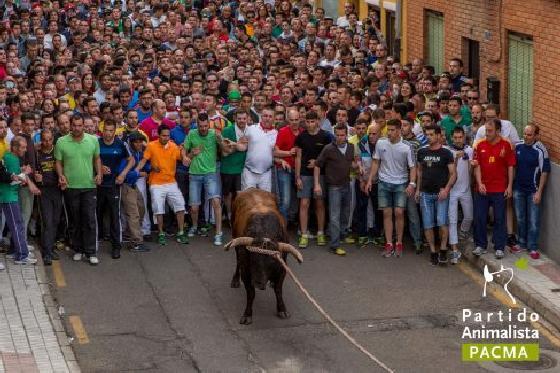 Toro Enmaromado