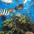 1,3 miljoen euro voor redder Great Barrier Reef