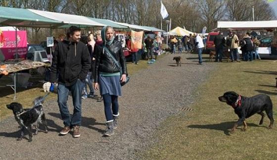 Zwerfdieren Festival