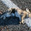 Jaarlijks 8 miljoen dode dieren in België door verkeer