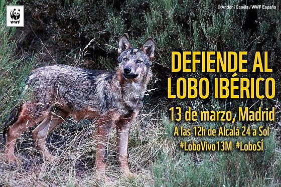 Aankondiging protest - Iberische wolf