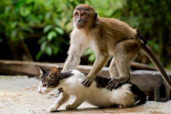 aap masseert kat