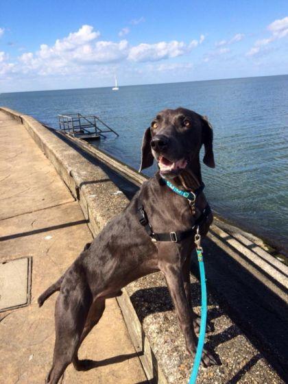 Alex is nu een gezonde, vrolijke hond, met een normaal gewicht. | Foto: Facebook