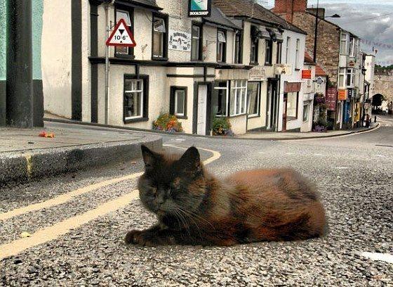 Alfie, de Chepstow Cat