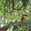 Amazone in Peru bedreigd door bouw wegennetwerk