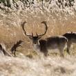 Ingezonden brief: Hetze tegen herten houdt aan