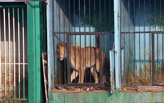 Dieren verlaten in dierentuin armeni animals today - Een hok ...
