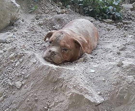 Fransen eisen maximale straf voor dierenmishandelaar
