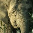 Olifanten kunnen drinkplaats niet bereiken door golfbaan