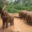 Vier olifanten dodelijk gewond door aanrijding met trein