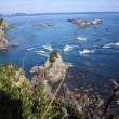 Erwin Vermeulen: Dolfijnenjacht in Taiji, november