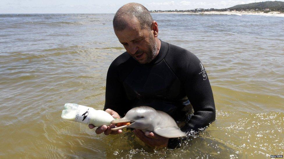 Baby dolfijn gered