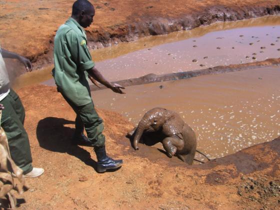 baby-olifant