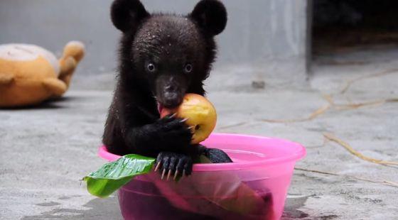 babybeertje berengalboerderij