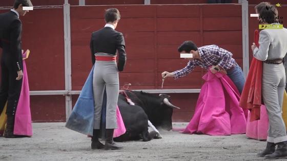 school voor stierenvechters