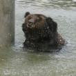 #GNvdD: Hoop voor beren op horrorboerderijen
