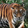 Hardere maatregelen tegen tijgerboerderijen