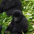 WNF geschokt door dood ranger in Virunga