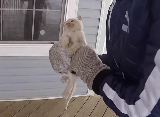 bevroren kitten
