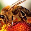 Bijenkasten vernield, duizenden bijen dood